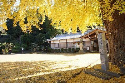 色づいた大イチョウと落ち葉と句碑(丹生酒殿神社)