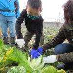 和歌山市で「親子野菜収穫体験」開催