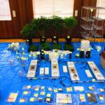 大麻草栽培で再逮捕、和歌山市の25歳男